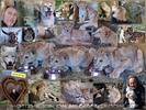 Die kleinen Löwenherzen