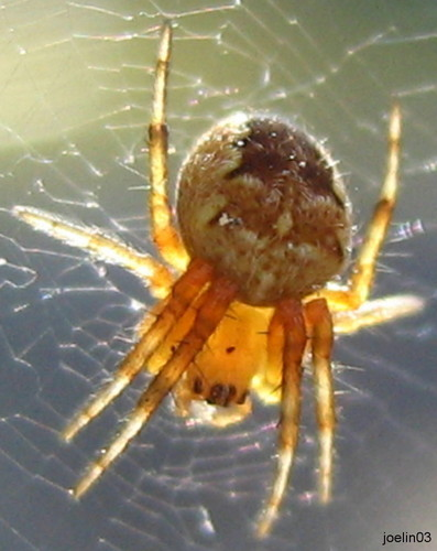 Spinne in der Abendsonne