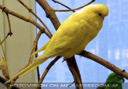 Bird care 2