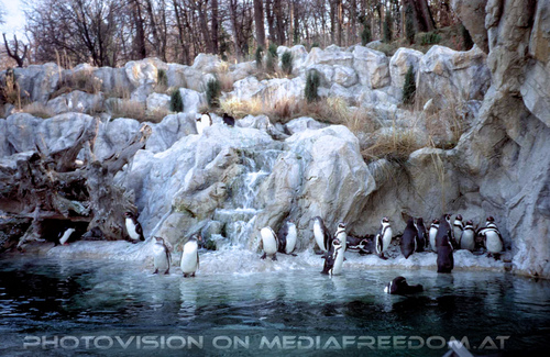 Humboldt Pinguine 1