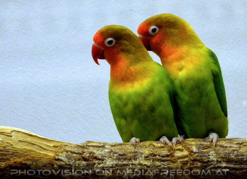 Bird care 5