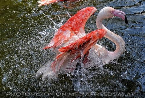 Flamingo Bad