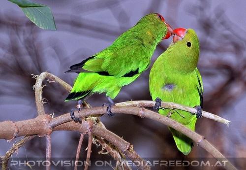 Im Vogelhaus 2: Papageien