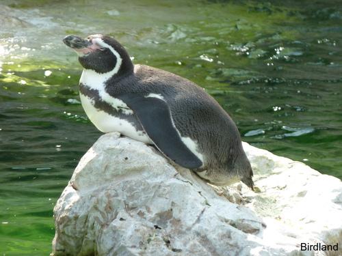 Sonnenbad: Pinguin
