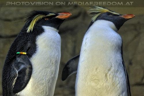 Pinguine 03
