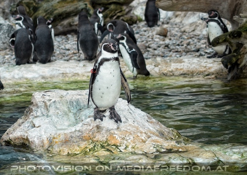 Pinguine am Abend 2