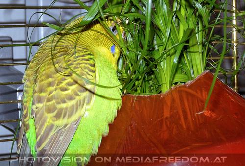 Bird care 10: Speedy