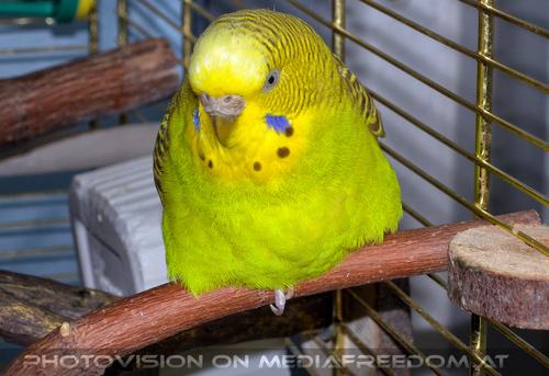 Birdland 2: Speedy