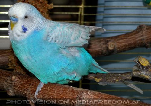 Birdland 3: Sunny