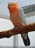 Papageienzeit 58
