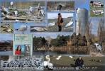 Wasservogelpark