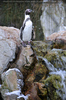 Pinguine 3
