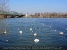 Beschwante Donau
