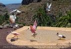 Bird Show 09