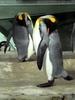 Der Schlaf der Pinguine