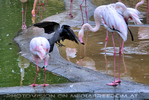 Flamingo Besuch 1