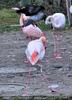 Flamingo Besuch 2