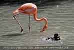 Flamingo und Ente