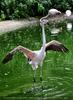 Flamingo Mama von Gerti