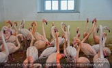 Flamingos im Winterquartier