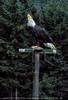 Greifvogel Schau 2
