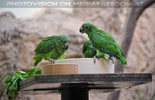 Grüne Papageien