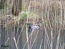 Frühlingserwachen am Teich
