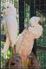 Parrots Park 12