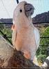 Parrots Park 15