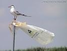 Sea Gull Place