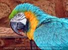 Exotische Tiere 09