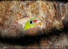 Papagei in Baumhöhle