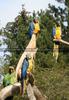 Amazonen - Empfangskomitee