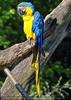 Papageien Schwarm 01