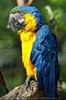 Papageien Schwarm 02