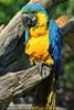 Papageien Schwarm 05