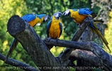 Papageien Schwarm 06