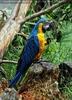 Papageien Schwarm 12