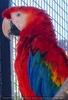 Parrots Park 02