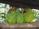 Parrots Park 06