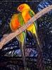 Parrots Park 08