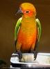 Parrots Park 10