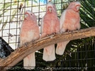 Parrots Park 13