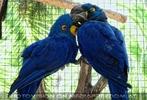 Parrots Park 17