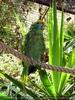 Parrots Park 18