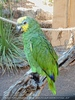 Parrots Park 19
