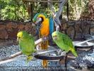 Parrots Park 20