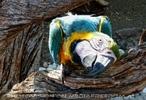 Parrots Park 21