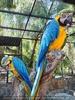 Parrots Park 23