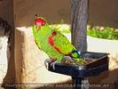 Parrots Park 26